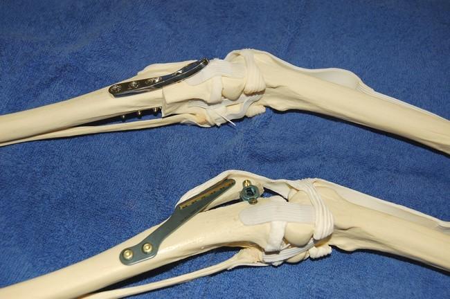 Rupture des ligaments croisés - Page 2 Rondaopetplotta